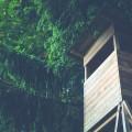 tree house small